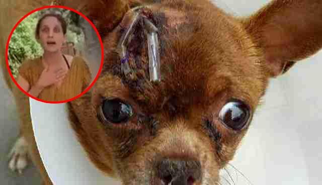 תיעוד מזעזע!! בחורה הורגת כלב עם אבן לראש ומסבירה למה עשתה את הזה!