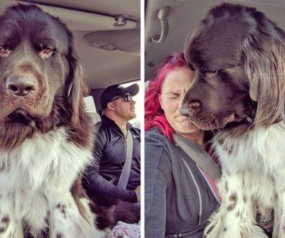 אנשים שיתפו תמונות של הכלבים הענקיים שלהם וזה פשוט בלתי נתפס עד כמה הם גדולים!